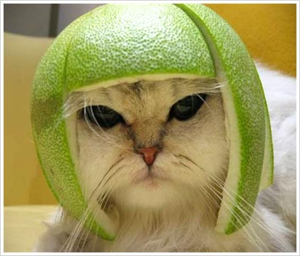 Funny-cat-with-orange-on-its-head